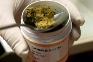Listo, reglamento para comercializar marihuana: Cofepris || El Hispano News
