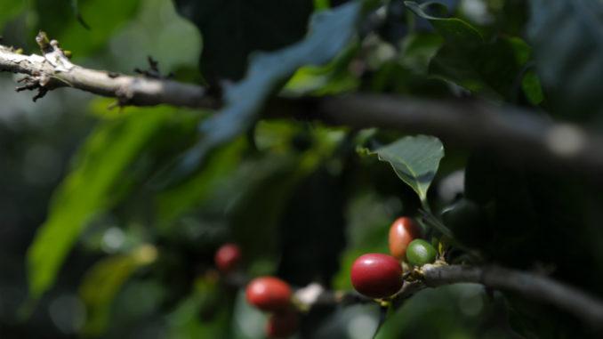 ¿Pagaría US$50 por una taza de café que viene del espacio? || El Hispano News